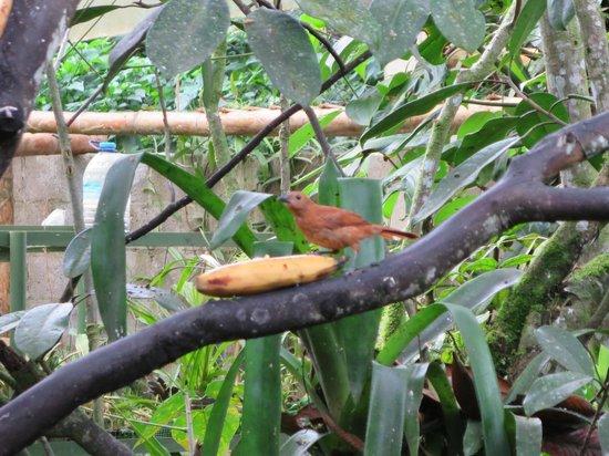 Cabanas Armonia y Jardin de Orquideas : birds feeding while eating breakfast