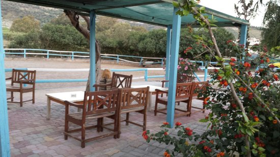 Finikia Horseriding : Immaculate stables