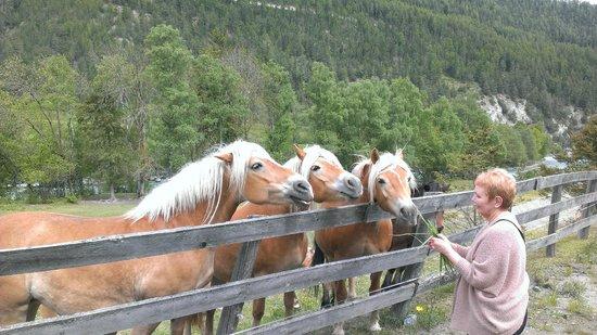 Gartenhotel Linde: Local horses