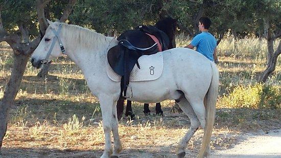 Finikia Horseriding : My horse....