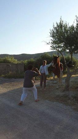 Finikia Horseriding : Gregory's camera skills