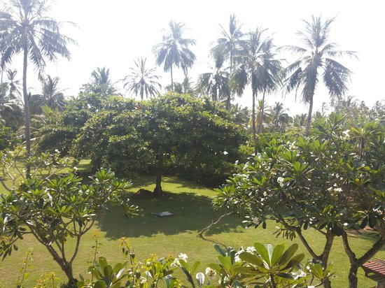 Bentota Beach by Cinnamon : View from the room