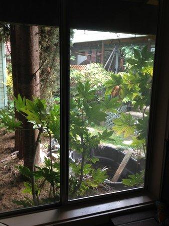 Sutter Creek Inn : View from window