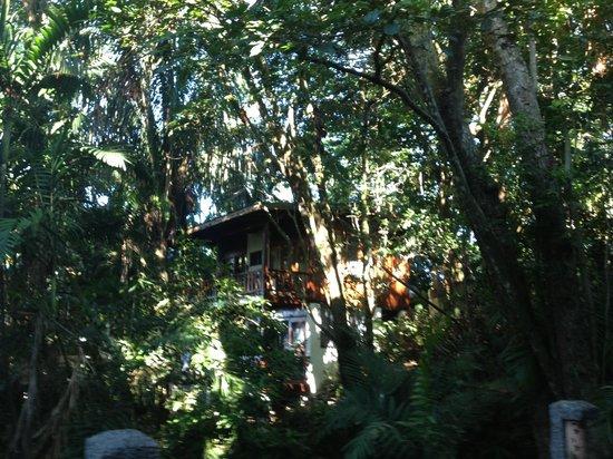 Hotel Costa Verde: Treehouse!