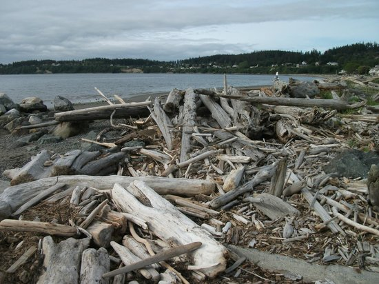 Windjammer Park: Driftwood on the beach