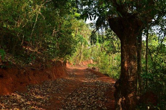 Maachli Homestay: Nature Trail