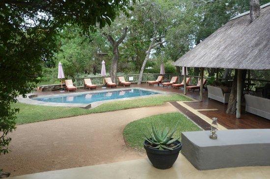 Sabi Sabi Selati Camp: pool