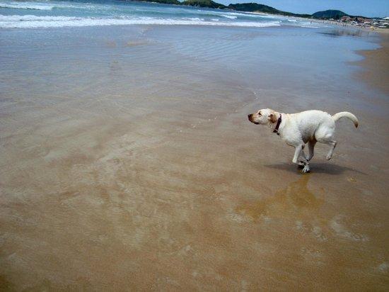 Pousada Espirito do Mar: A praia fica a 50 metros da pousada.
