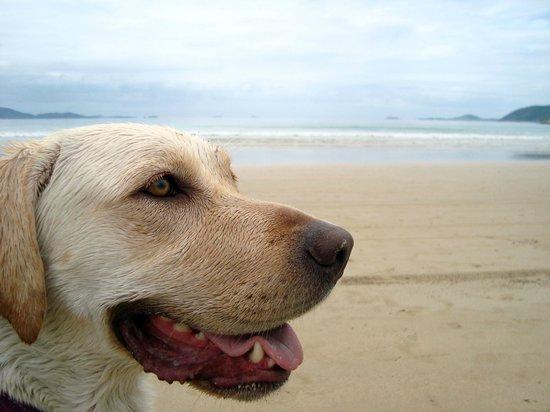 Pousada Espirito do Mar: Praia muito proxima.