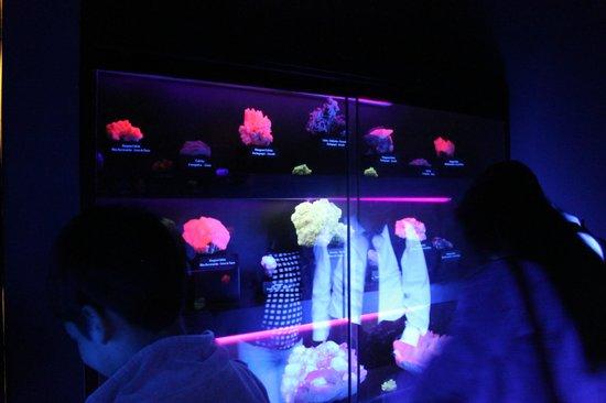 Museo de Minerales Andres del Castillo: Minerales fluorescentes
