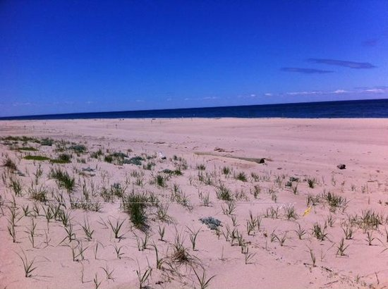 Race Point Beach : Wide view