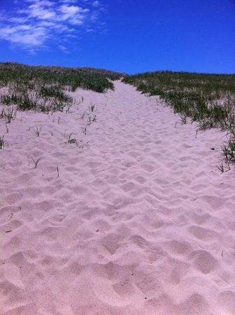 Race Point Beach: Path to the beach