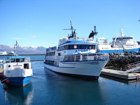 Whale Watching Reykjavik - Special Tours: In Harbour
