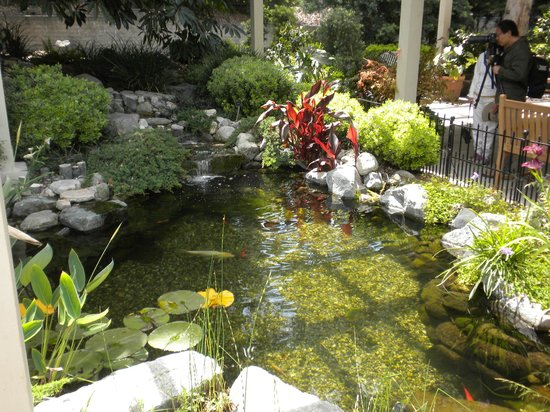 South Coast Botanic Garden: Koi Pond