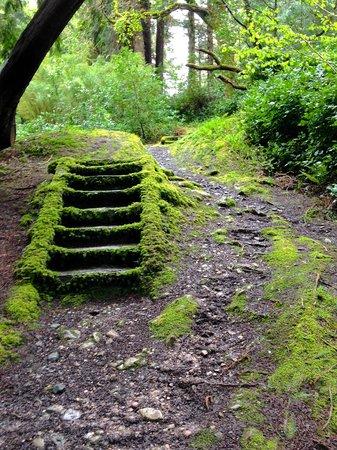 Derreen Gardens: mossy steps