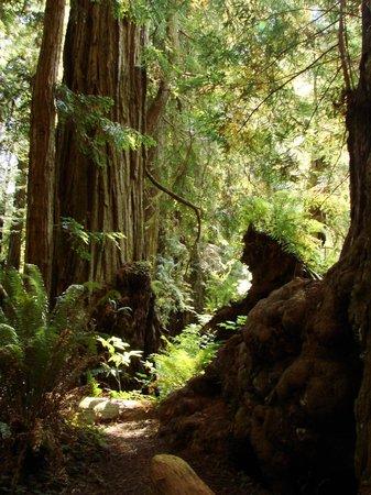 Redwood National Park: 遊歩道