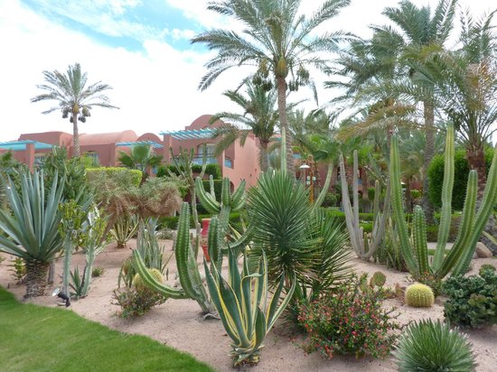 Club Magic Life Sharm el Sheikh Imperial: One of the lovely planted areas around the hotel
