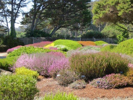 Mendocino Coast Botanical Gardens: 手入れされた庭園