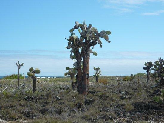Galapagos Beach at Tortuga Bay: piante locali
