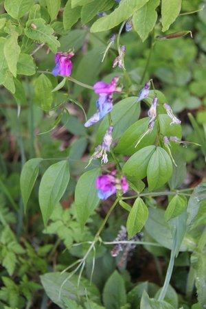 Randonnées Autour du Lac de Lamoura : Wildflowers at Lac du Lamoura