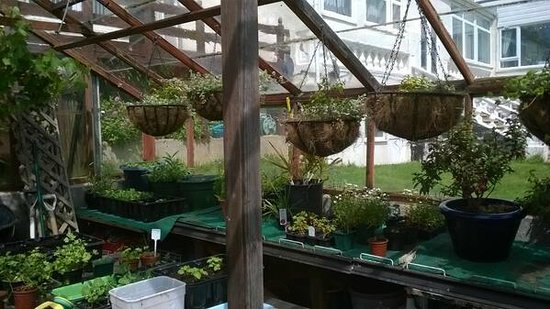 Eype's Mouth Country Hotel: Greenhouse growing herbs, vegetables, hanging baskets