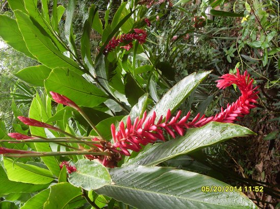 Carambola Botanical Gardens & Trails : beaufiful flora