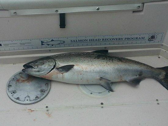 Coastal Island Fishing Adventures: Nice Fish