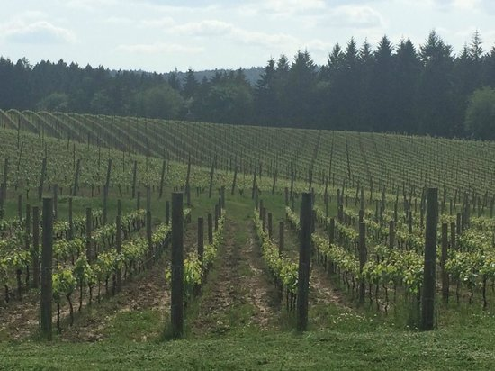 A Great Oregon Wine Tour: Beautiful!