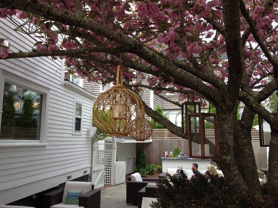 76 Main : Courtyard cherry tree in bloom
