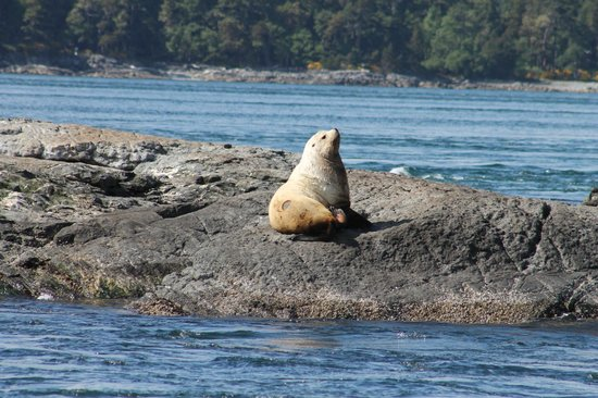 Five Star Whale Watching: Sealion