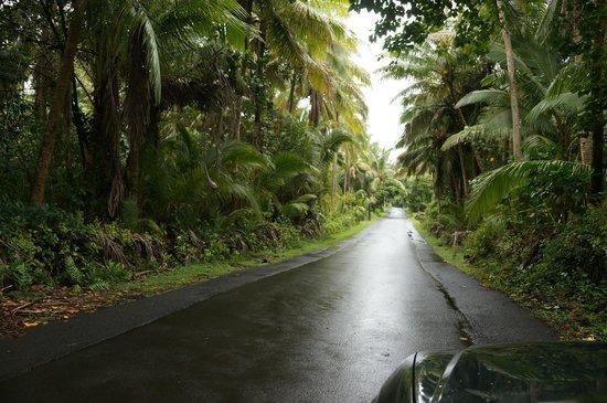 Hale Moana Bed & Breakfast: Tropischer Regenwald