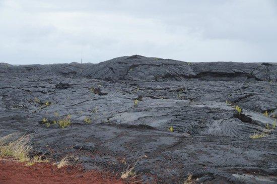 Hale Moana Bed & Breakfast: erstarrte Lavafelder