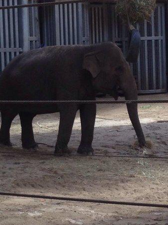 Dierenpark Planckendael : Beautiful elephants
