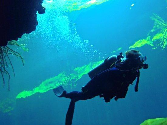 Planet Scuba Mexico: Cenotes
