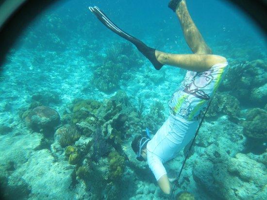 Hostal Mayito: Ale buscando el pez león