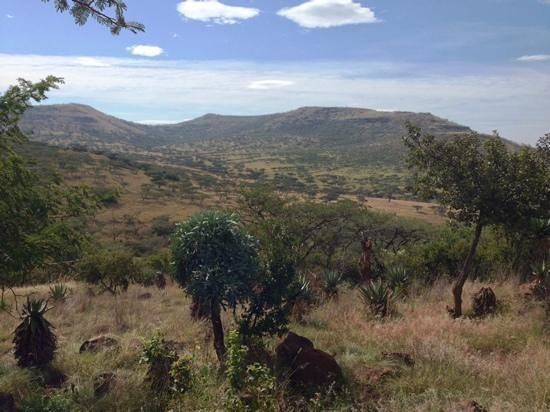 Three Tree Hill: View of Spioenkop from our room