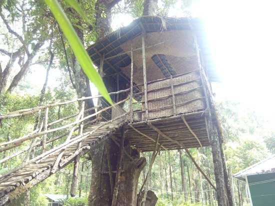 Blue Bells Valley Resort: tree top used for dining and lunch.