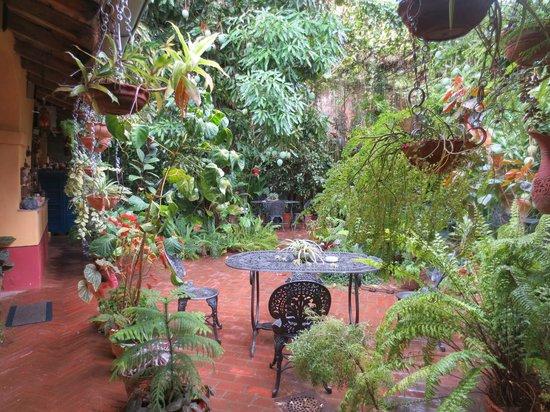 Hostal Casa Colonial el Patio: el hermoso patio