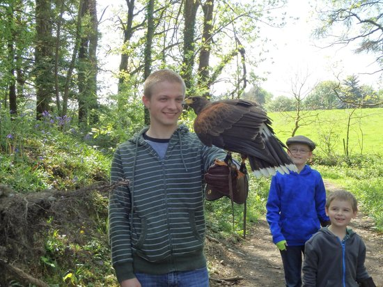 Killarney Falconry: The lads with Texas