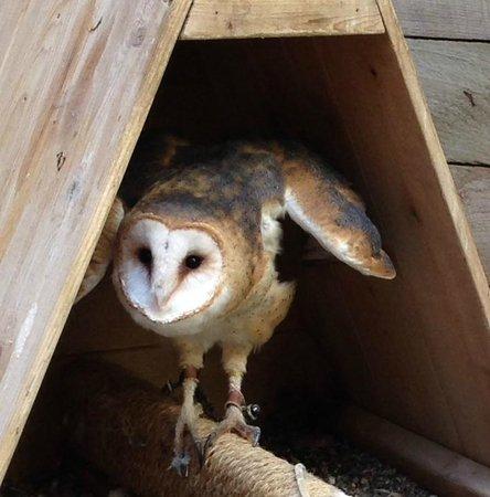 The Raptor Center: Whisper the Barn Owl