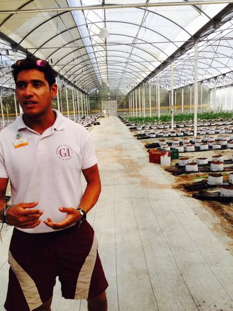 El Dorado Royale, by Karisma: One of the greenhouses.