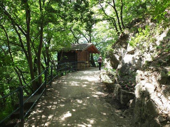 Tappeinerweg: Schatten wechselt ab mit sonnigen Passagen