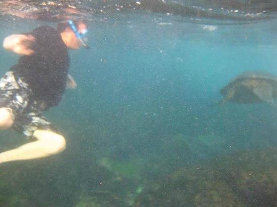 Honokeana Cove Condominiums : Me and a Sea Turtle in the Cove