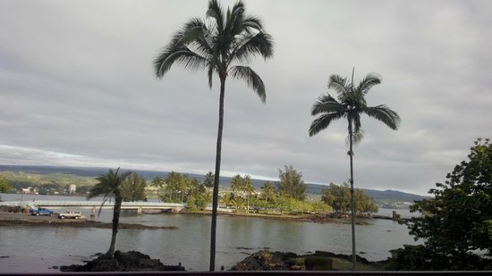 Hilo Seaside Hotel: View of Palms