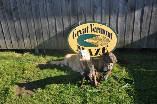 Great Vermont Corn Maze: my dogs doing their yearly pose with the sign