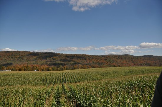 Great Vermont Corn Maze: the Incredible view from a Bridge