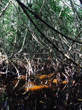 Everglades Rentals & Eco Adventures: Not impassable!