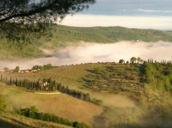 Relais Vignale : morning dew over vineyard