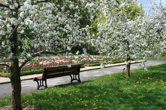 A la Carte Bed & Breakfast : The Montreal Botanical Garden is within walking distance