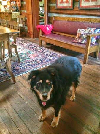 Highland Haven Creekside Inn: Rowley! what a sweetheart